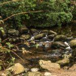 Fairy Glen-Rostrevor-Kilbroney Park
