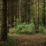 Lagan Valley Regional Park-Belfast