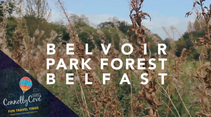 Belvoir Park Belfast - The Forest In The City