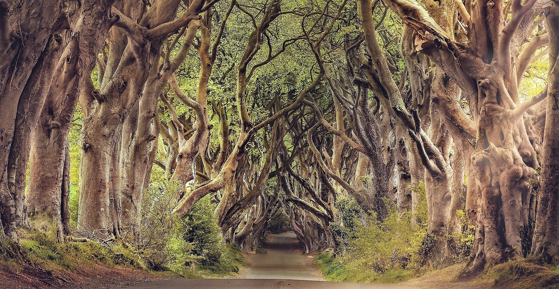 The Dark Hedges- Game of Thrones