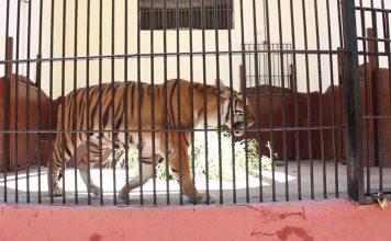Animal Kingdom Giza Zoo