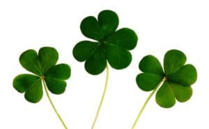 Three Irish Clovers - Symbol of Ireland