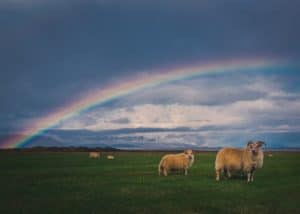 Irish Symbolism Rainbows