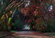 Kilmacurragh National Botanic Gardens