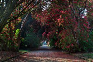 Kilmacurragh National Botanic Gardens