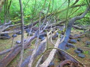 County Cavan Erica's Fairy Forest