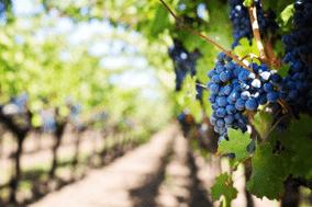 alentejo vineyards
