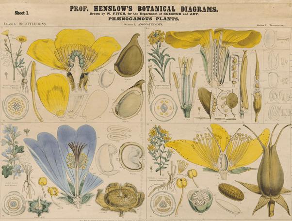 botanical diagram