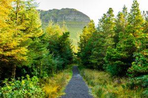 A road through the trees in Sligo