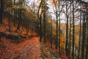 An autumn stroll through The Devil's Glen Forest