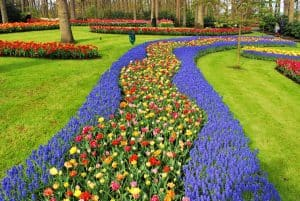 The flower gardens at Keukenhof are a sight to behold