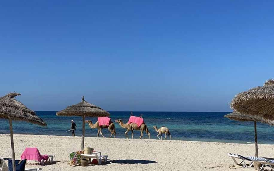 a picture of a beach on Djerba island with camels making their way across it