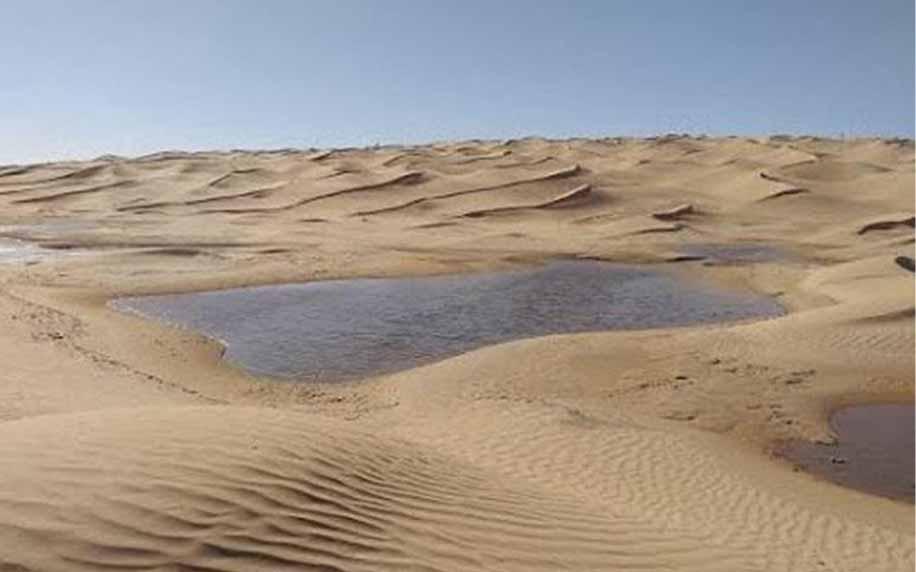the desert oasis in douz