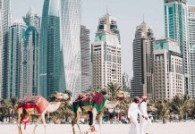 the skyline of dubai's skyscrapers with camels on the beach being led by a man