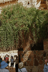 The Holy Bush that moses visited in Saint Catherine.