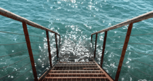 A ladder leading into the green sea in Trieste