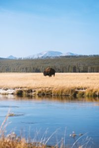 The scenery in Yellowstone National Park in America