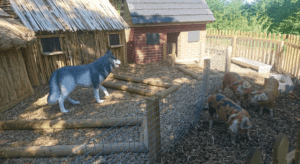 The pigs are ready to be pet at the Ark Farm in Belfast