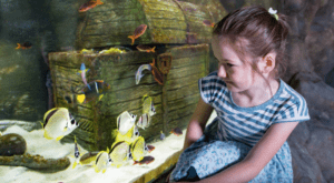 A girl looks at the fishes in the tank at the aquarium in Belfast